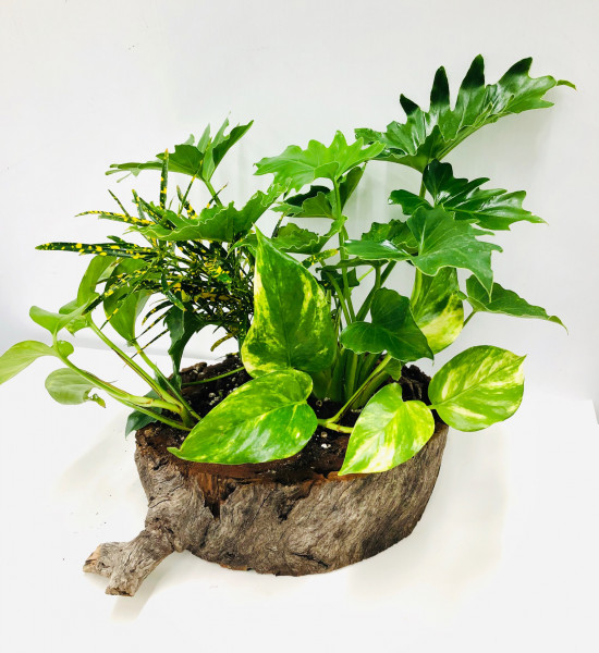 Indoor Plants Gift