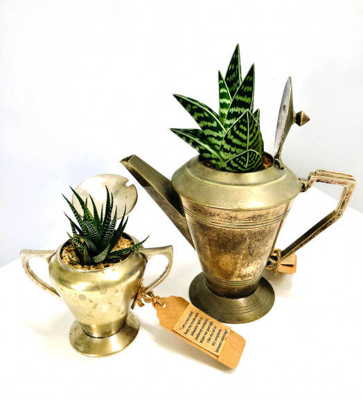 vintage teapot and succulent gifts