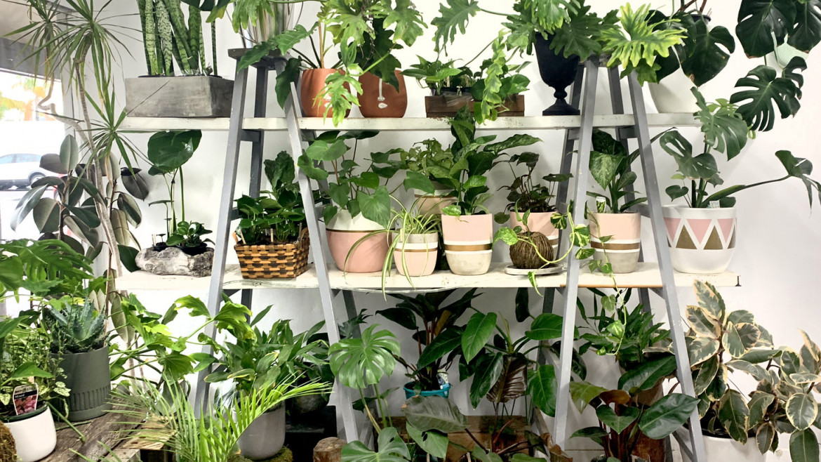 6 Indoor Plants to Love