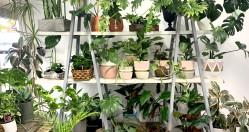 6 Indoor Plants to Love