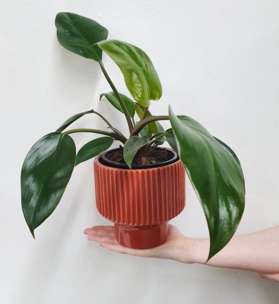 retro planter