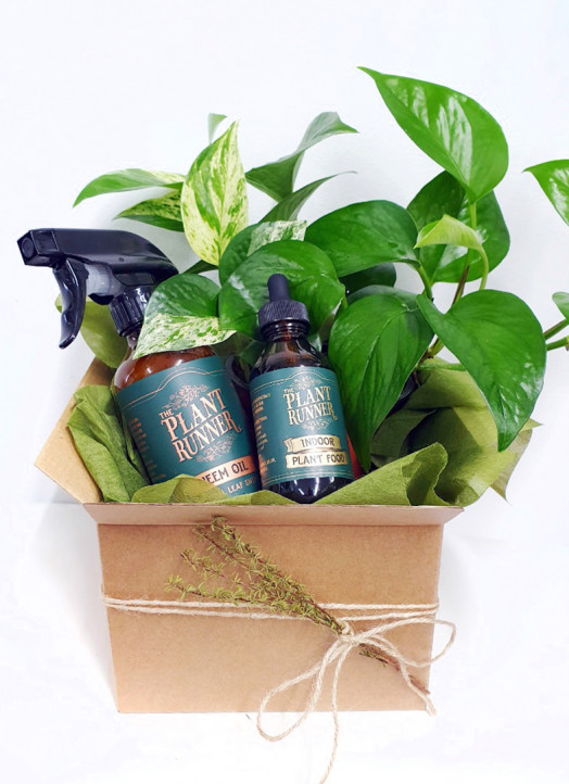 Plant lover gift hamper