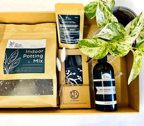 Indoor Plant gift box
